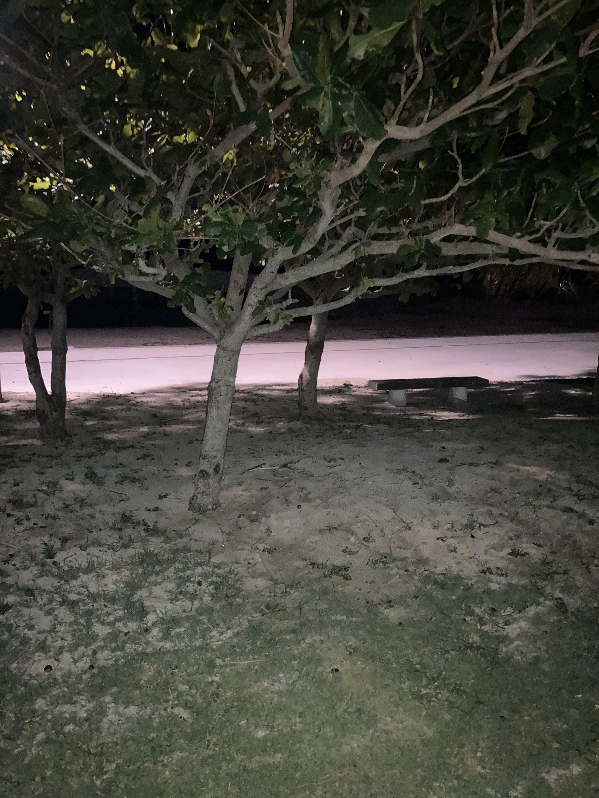 夜風と砂浜散歩